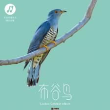 华语群星《布谷鸟》2018/320K/MP3/BD/CT